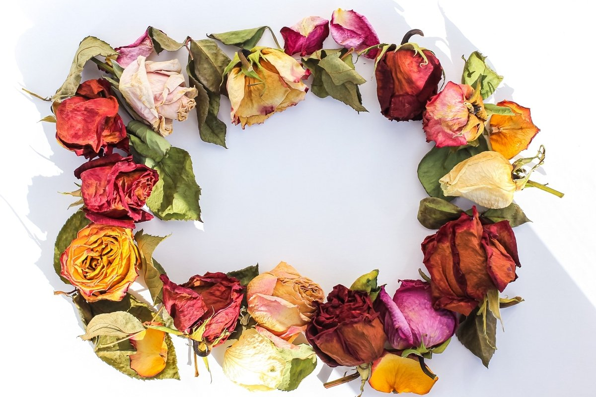 Frame of laid out dry buds of roses, petals, leaves example image 1