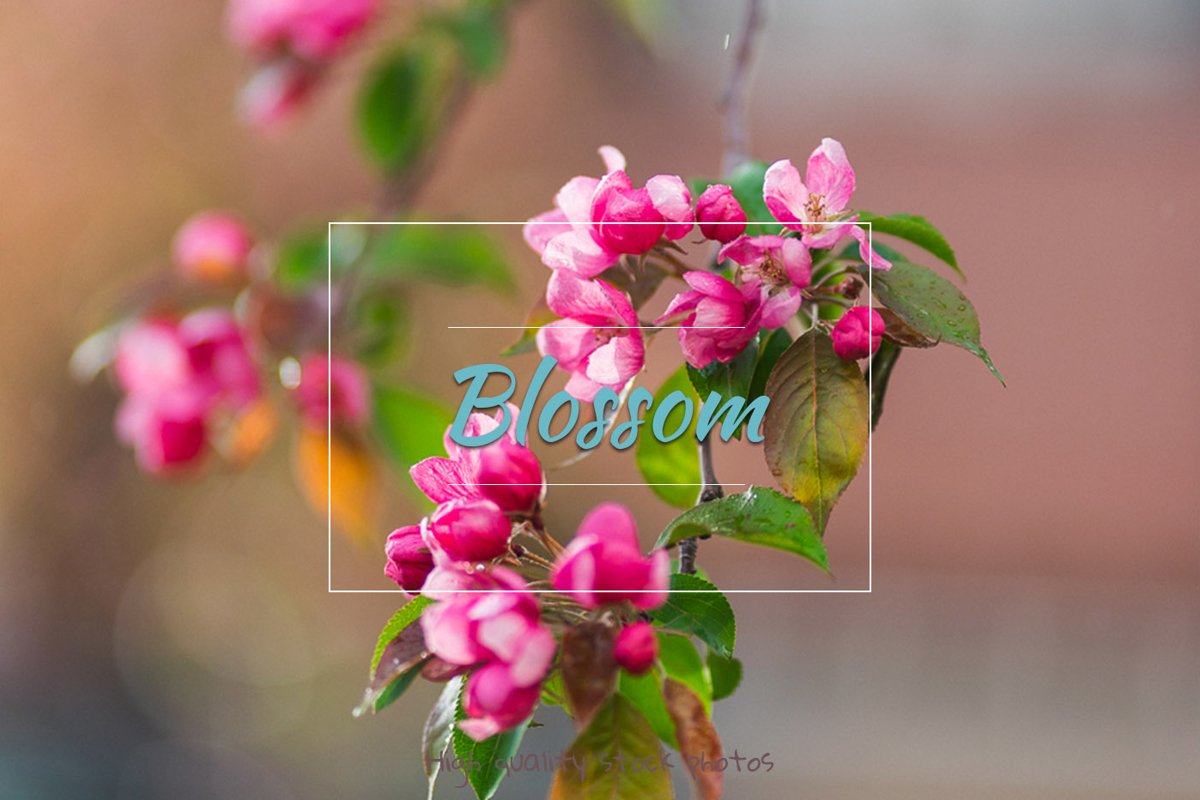 Flowers, spring blossom example image 1