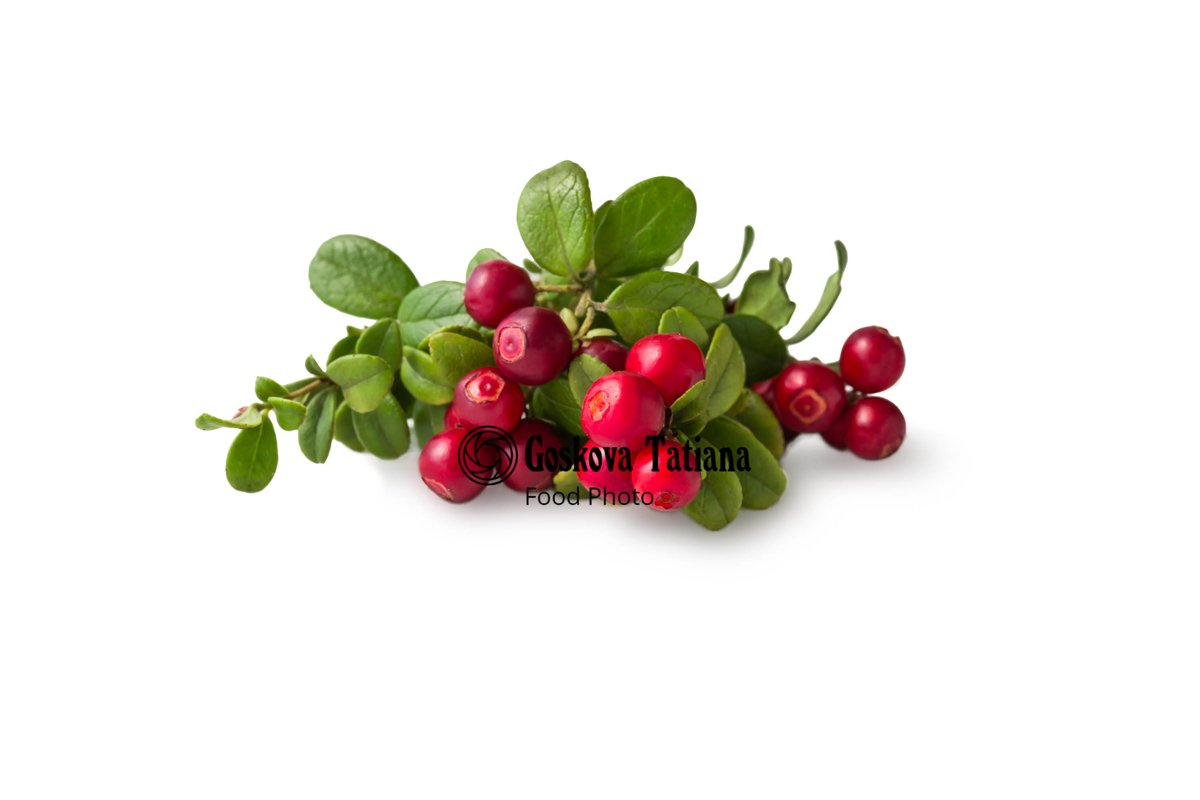 Photo of Cowberry foxberry, lingonberry with leaves isolated example image 1