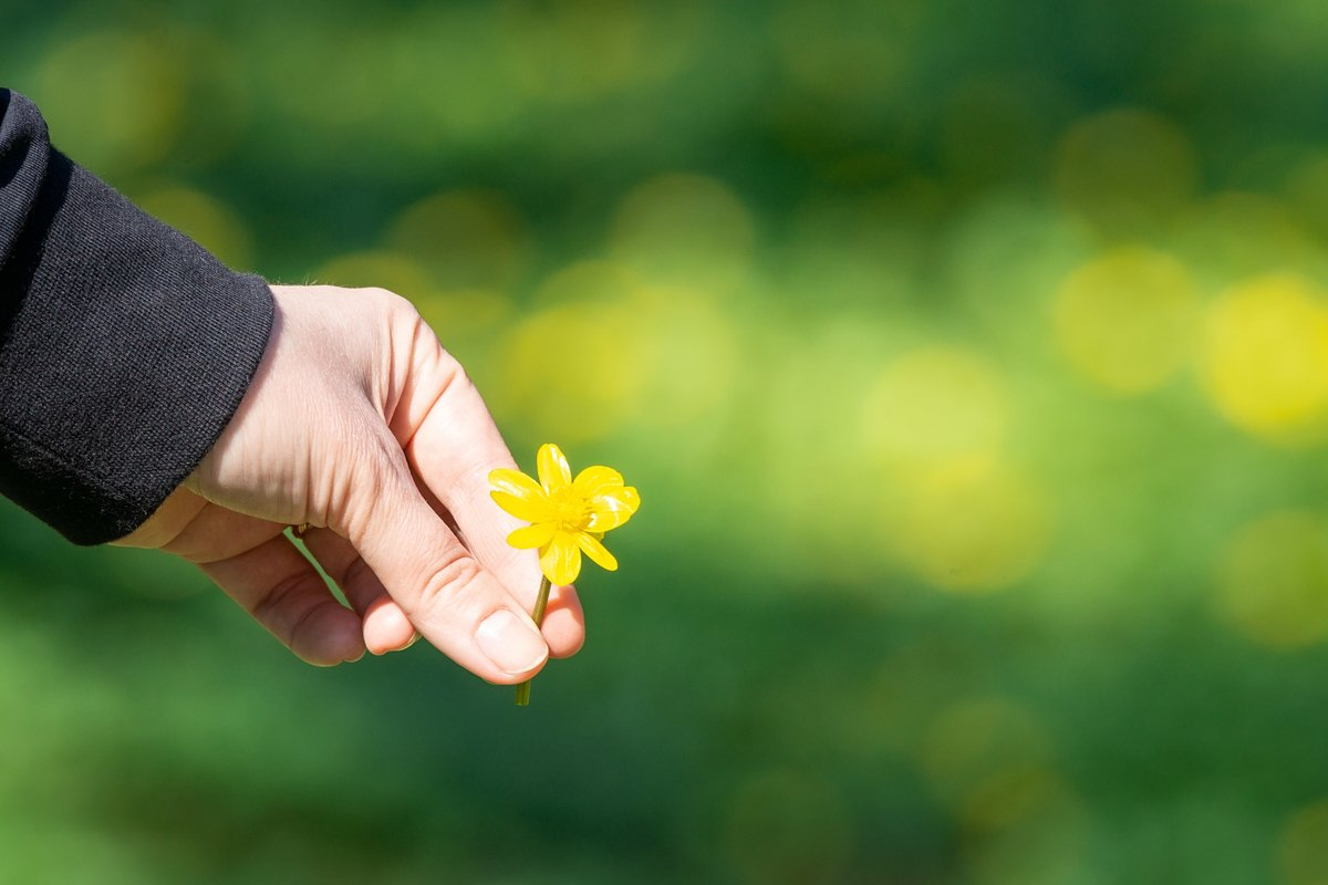 Buttercup in hand, green background example image 1