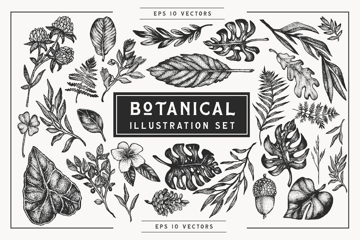 Botanical Vector Illustration Set example image 1