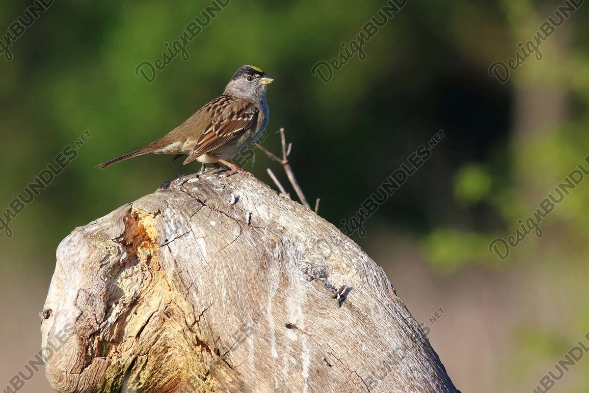 Stock Photo - Close-Up Of Bird Perching On Wood example image 1