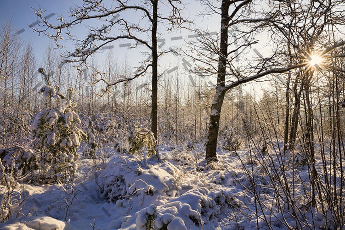 winter landscape sun example image 1
