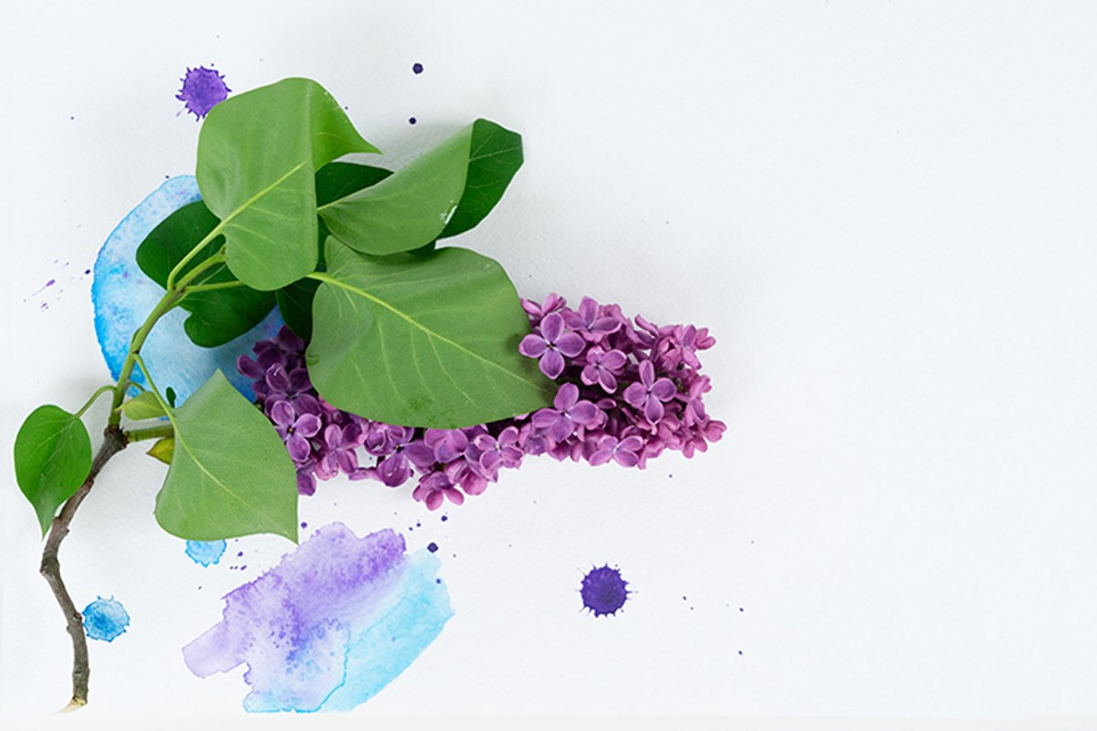 Fresh lilac flowers twig example image 1