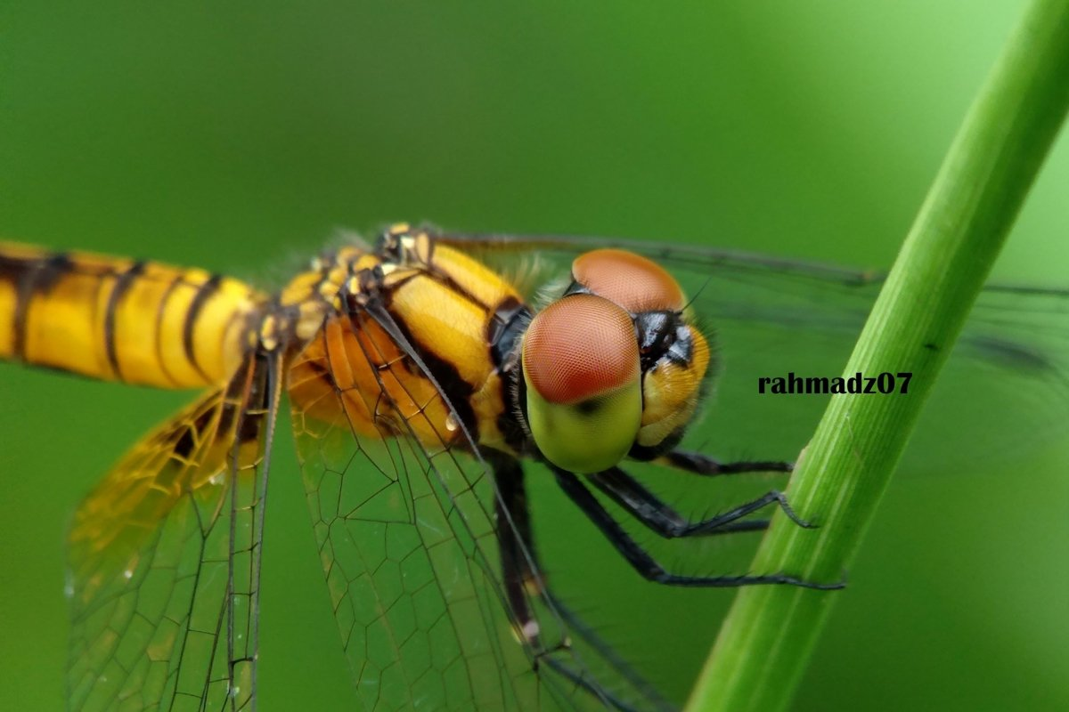 Extreme Close-Up Of Dragonfly example image 1