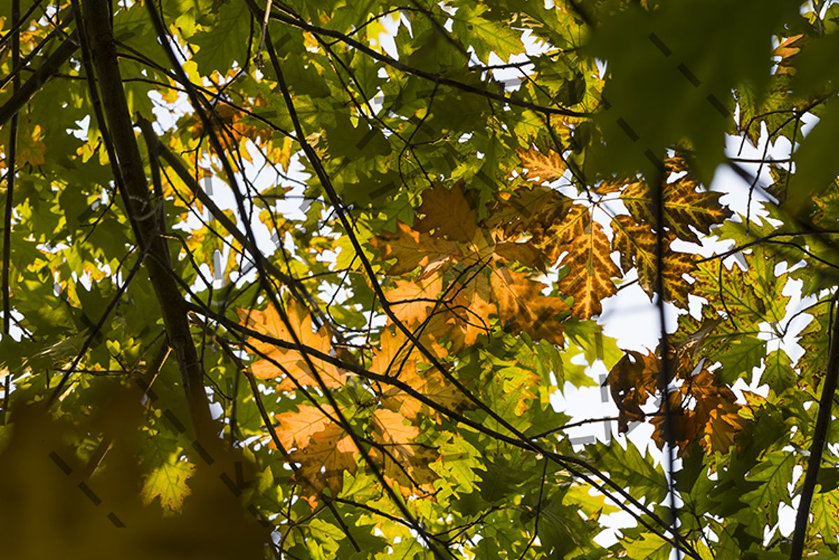 autumn nature example image 1