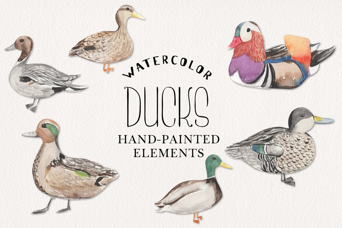 Ducks Watercolor Elements Hand Painted Birds Detailed example image 1