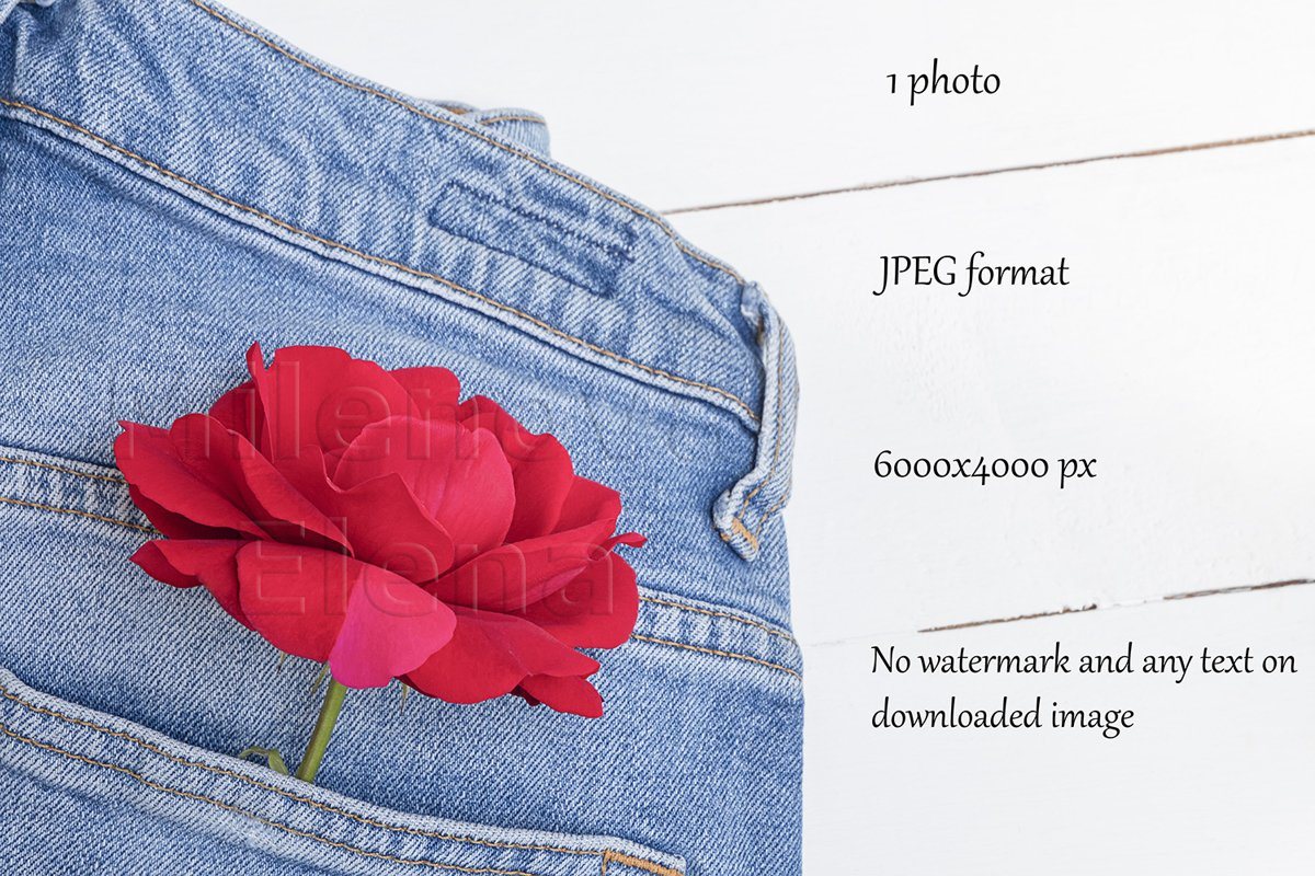 Flat lay with blue jeans and red rose flower example image 1