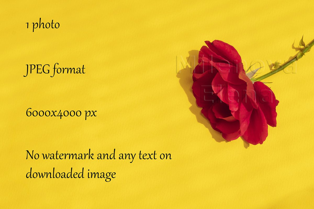 Beautiful red rose on bright yellow background example image 1