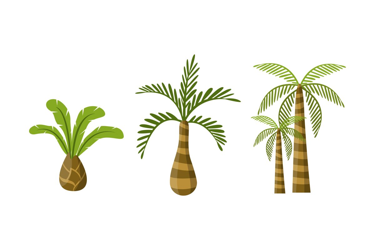 Palm Tree Illustrations example image 1