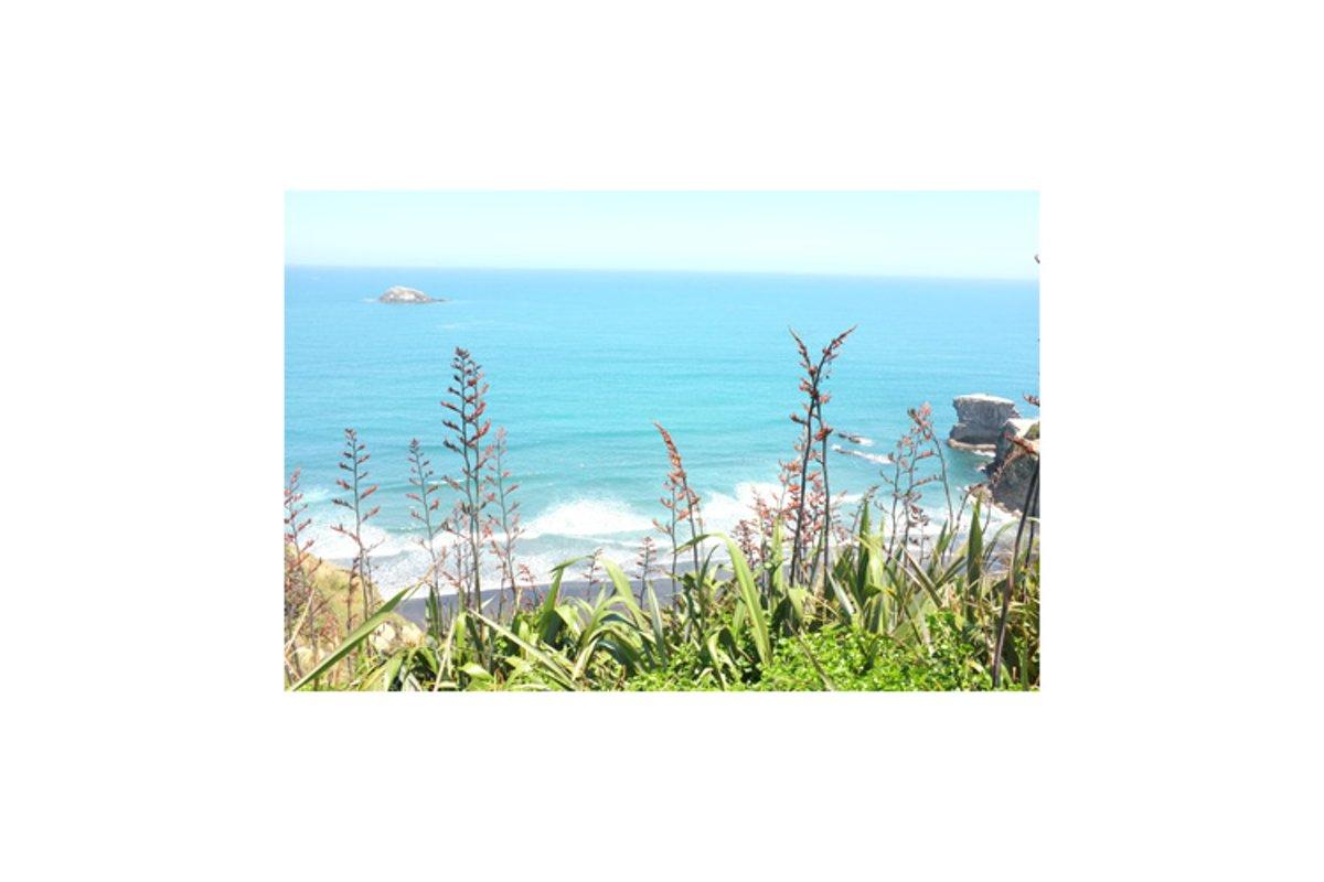 Photo of New Zealand flax or harakeke example image 1