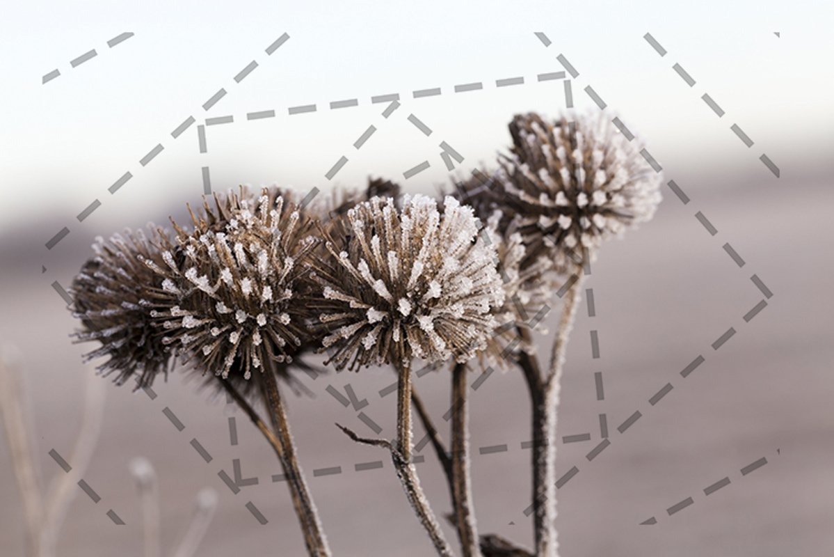 white frost example image 1
