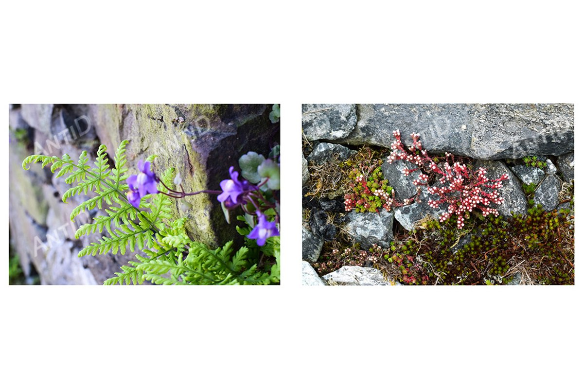 A set of 2 images. Natural background moss, stones, flowers example image 1