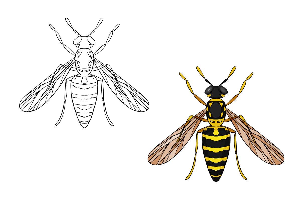 Wasp illustration PNG, JPEG, Ai, EPS, SVG file format example image 1