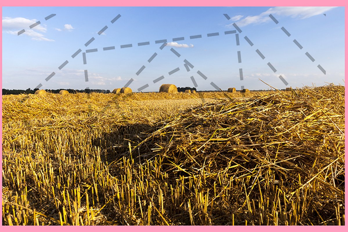 field wheat example image 1