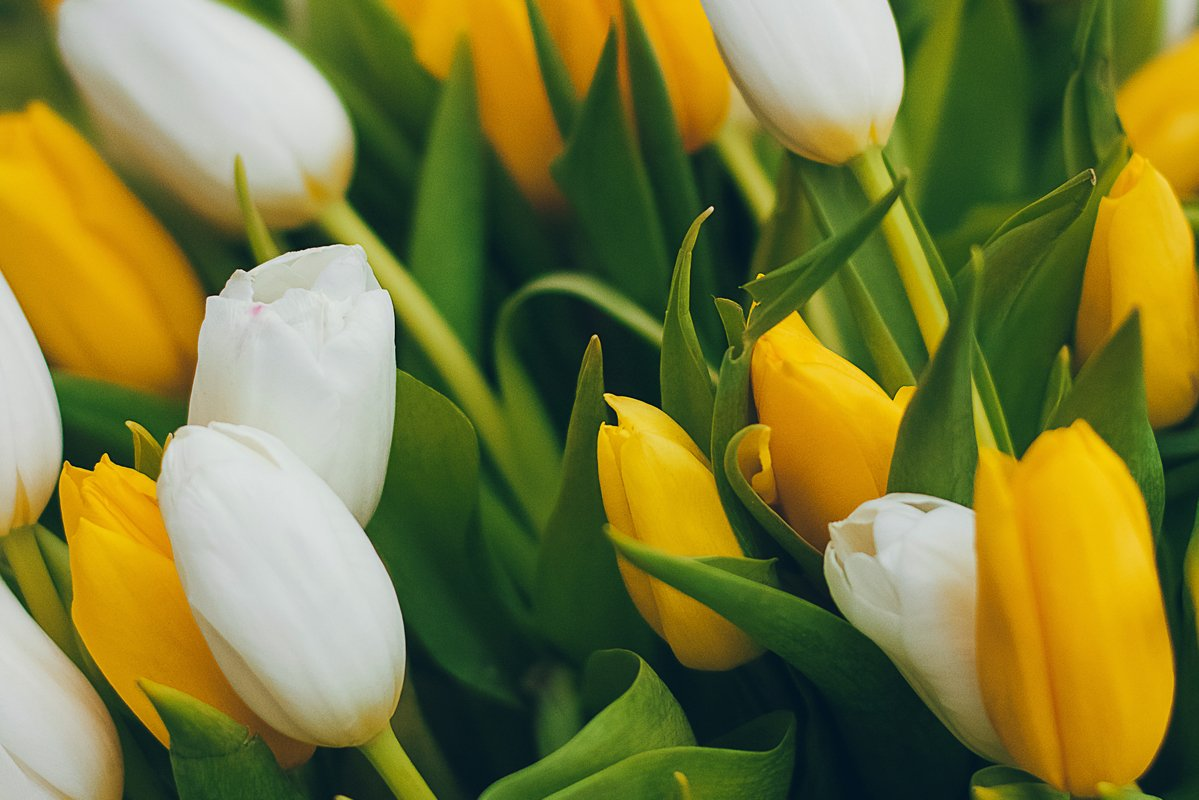 Still life with white and yeallow tulips bouquet example image 1