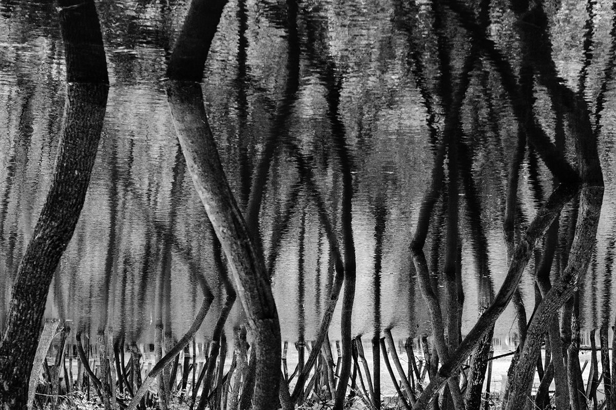 Black and white forest. Abstraction. Reflection example image 1