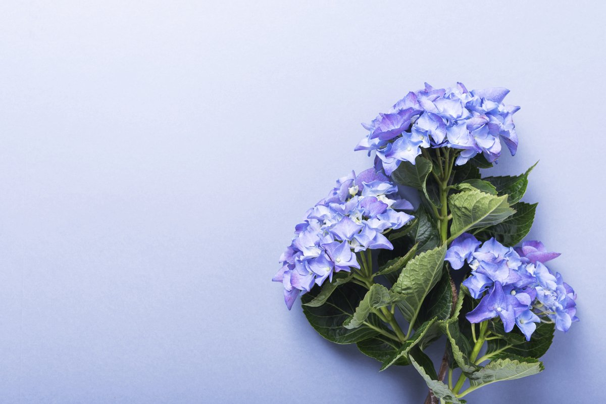 Wedding invitation card with amazing blue hydrangea flowers example image 1