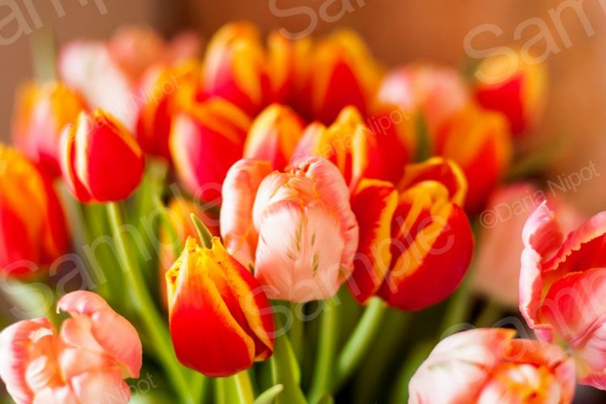 Bouquet of beautiful colorful tulips example image 1