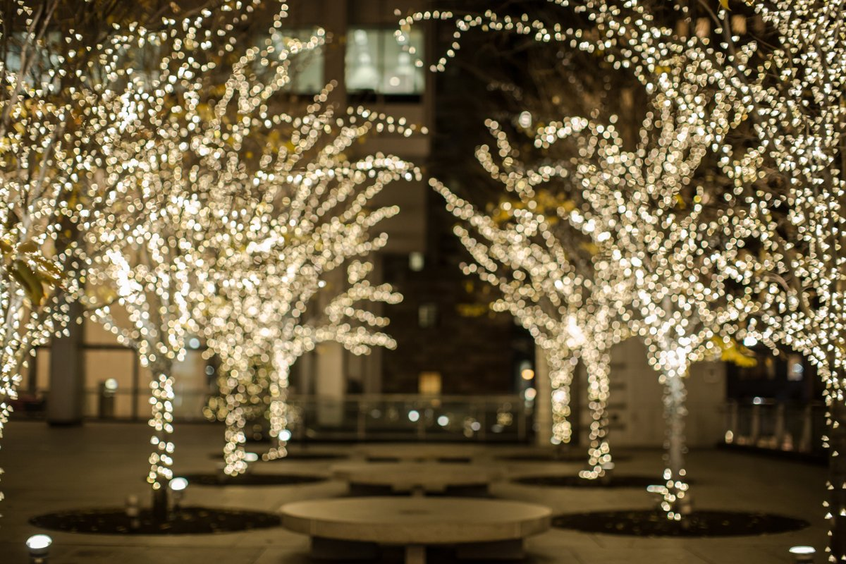 Light trees background example image 1
