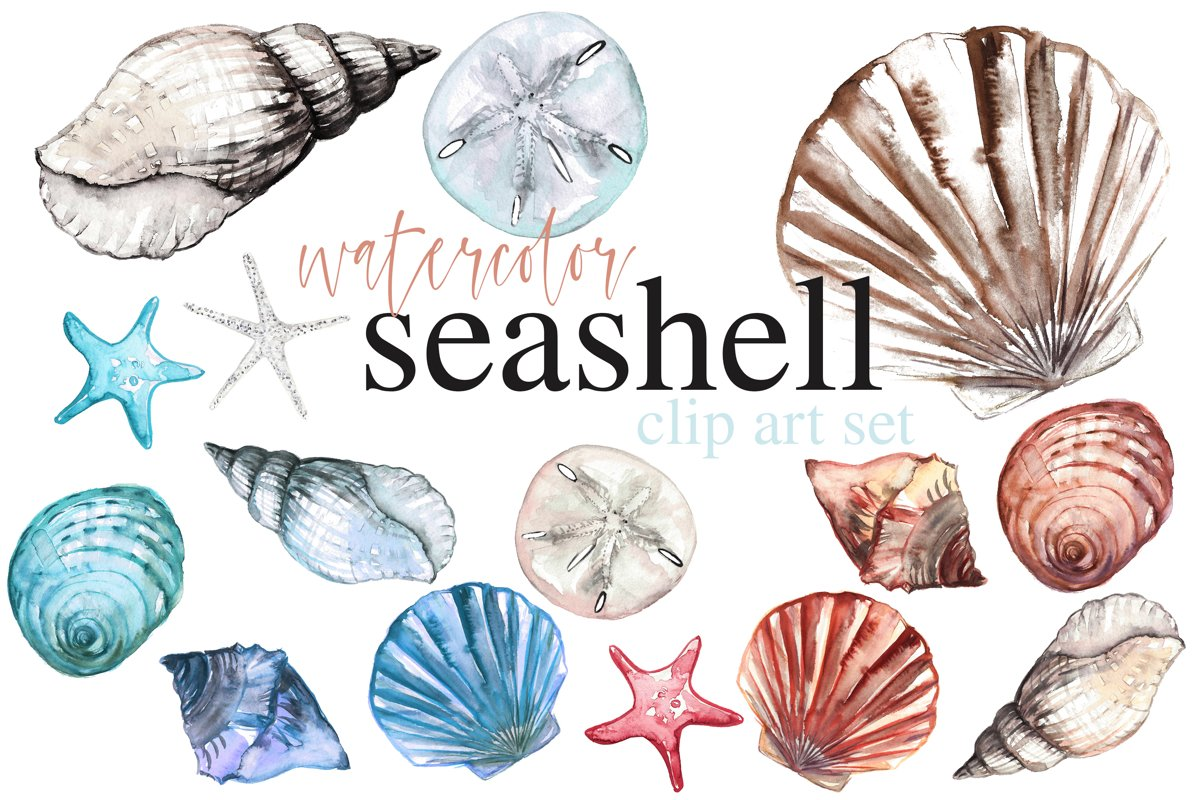 Seashell Watercolor Clip Art Set Beach Themed Ocean Art example image 1