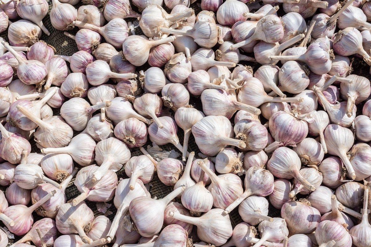 background of garlic example image 1
