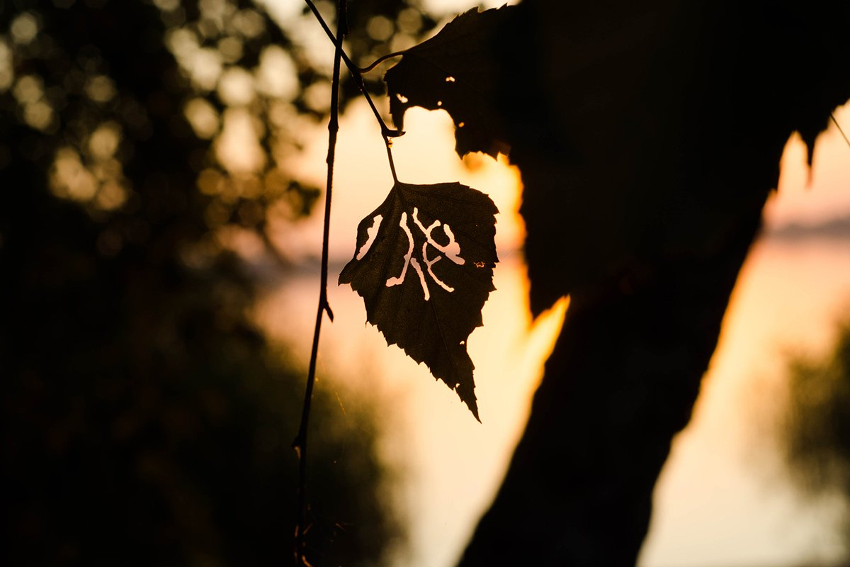 Tree at sunset. nature. example image 1