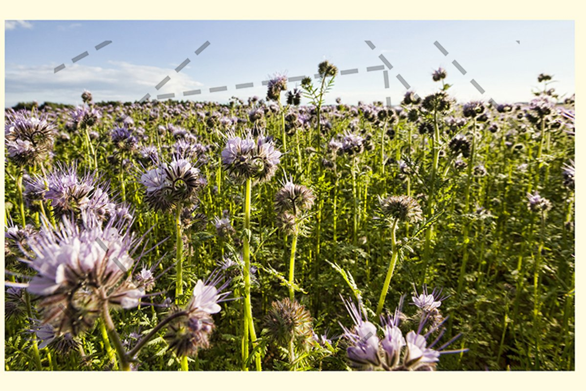 purple flowers example image 1
