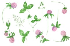 Watercolor wildflower clover. Wildflower clipart. St.Patrick Product Image 3