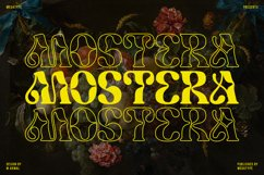 Mostera Product Image 1