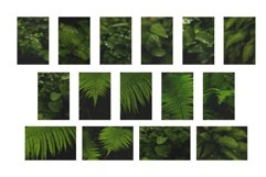 Greens after rain. 15 images BUNDLE Product Image 9