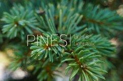 Pines Light & Pines Light Italic Product Image 1