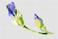 Irises blue Summer sky watercolor png Product Image 3
