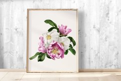 Wild roses clipart. Pink and white roses bouquets. Product Image 5