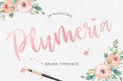 Plumeria Brush Script Font Product Image 1