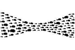 School of fish Product Image 1