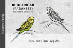 Budgerigar, Parakeet parrot, bird illustration, vector & PNG Product Image 1