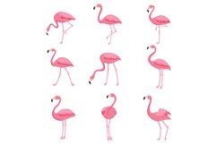 Cartoon pink flamingo vector set. Cute flamingos collection Product Image 1