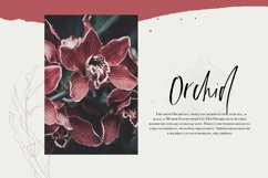Euphoria | Handwritten Font Product Image 2
