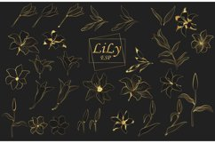 Lily flower. Line art Product Image 2