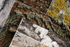 Set of forest backdrops - tree bark backgrounds Vol4 Product Image 4