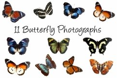 11 Butterfly Collection on White Background Lepidoptera Product Image 1