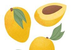 Mango hand drawn illustrations Product Image 3