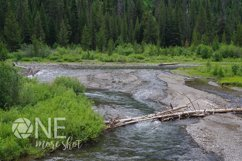 Yellowstone National Park River Trees - Western USA Photo Product Image 1