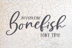 Web Font Bonefish Font Trio Product Image 1