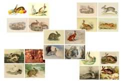 Easter Bunny and Rabbit Vintage Illustrations 1 PDF Product Image 2