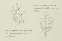 Botanical Procreate stamp brushes, vector clipart Product Image 2