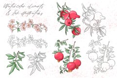 Pomegranate hand drawn clipart Product Image 5