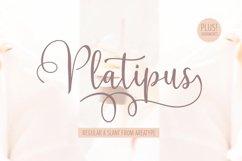 Platipus Script Product Image 1