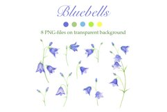 Bluebells and Meadow Herbs Product Image 3